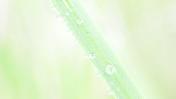 zblízka trávy s čůrky na rozostřeného pozadí