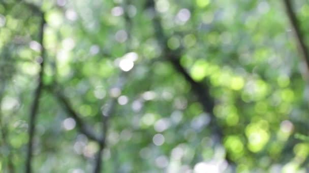 blur levelek szél természetelvű háttérben és a fény