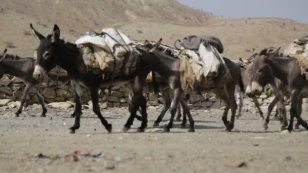 workers and donkey caravan walking in Afar village, Ethiopia