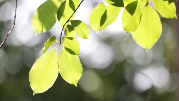 Zelený strom listí ve slunečním světle
