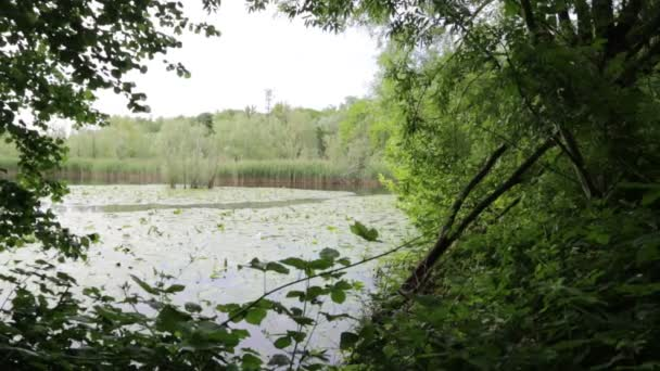 beautiful pond with calm water and green trees, scenic natural background