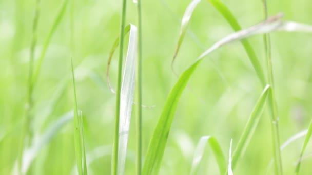Detailní pohled krásné přírodní pozadí s trávy ve větru