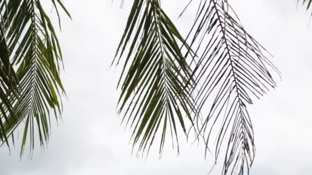 tropical palm tree leaves moving by wind