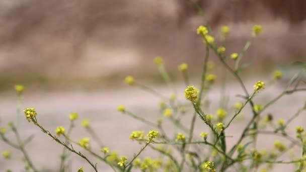 gyönyörű Sárga virágokat Irán antik kertben