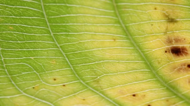 close-up view of blur green leaf in wind, abstract background and light
