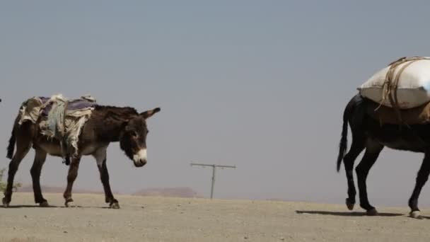 scenic view of unidentified people and donkeys in desert