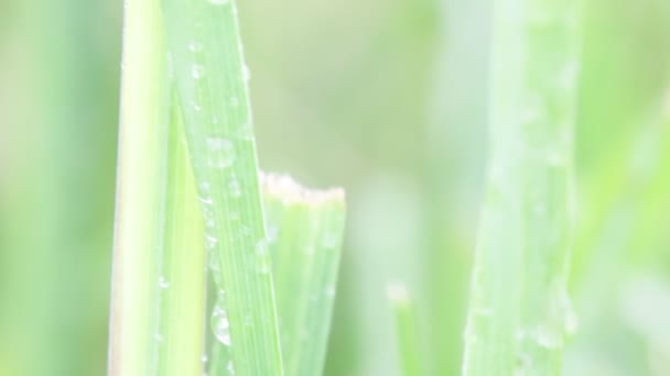 close up of grass with water drops on blurred background