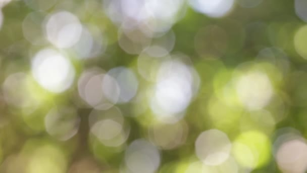 selective focus of abstract blurred green background