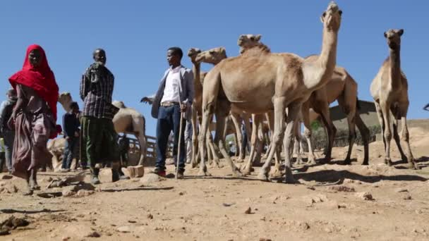 people in dromedary market in sahara desert