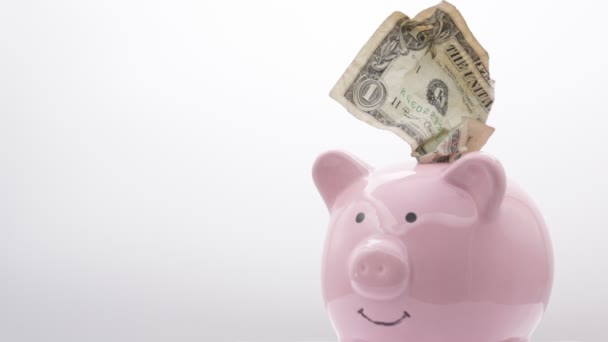 Prasátko s dolarovou bankovkami na bílém pozadí, jako koncept peněz a investic