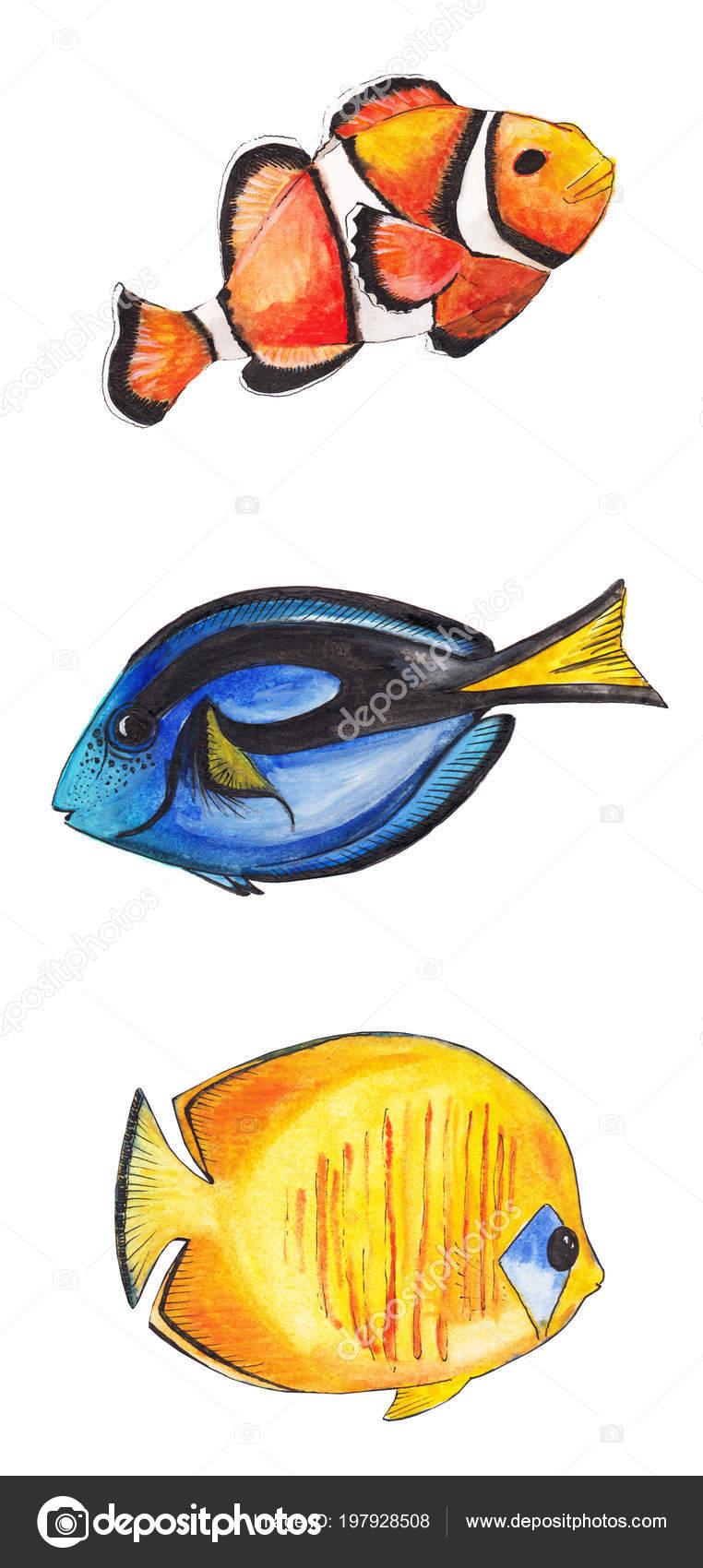Aquarell Zeichnung Eines Fisches Clown Fisch Und Fisch Chirurg Fisch ...