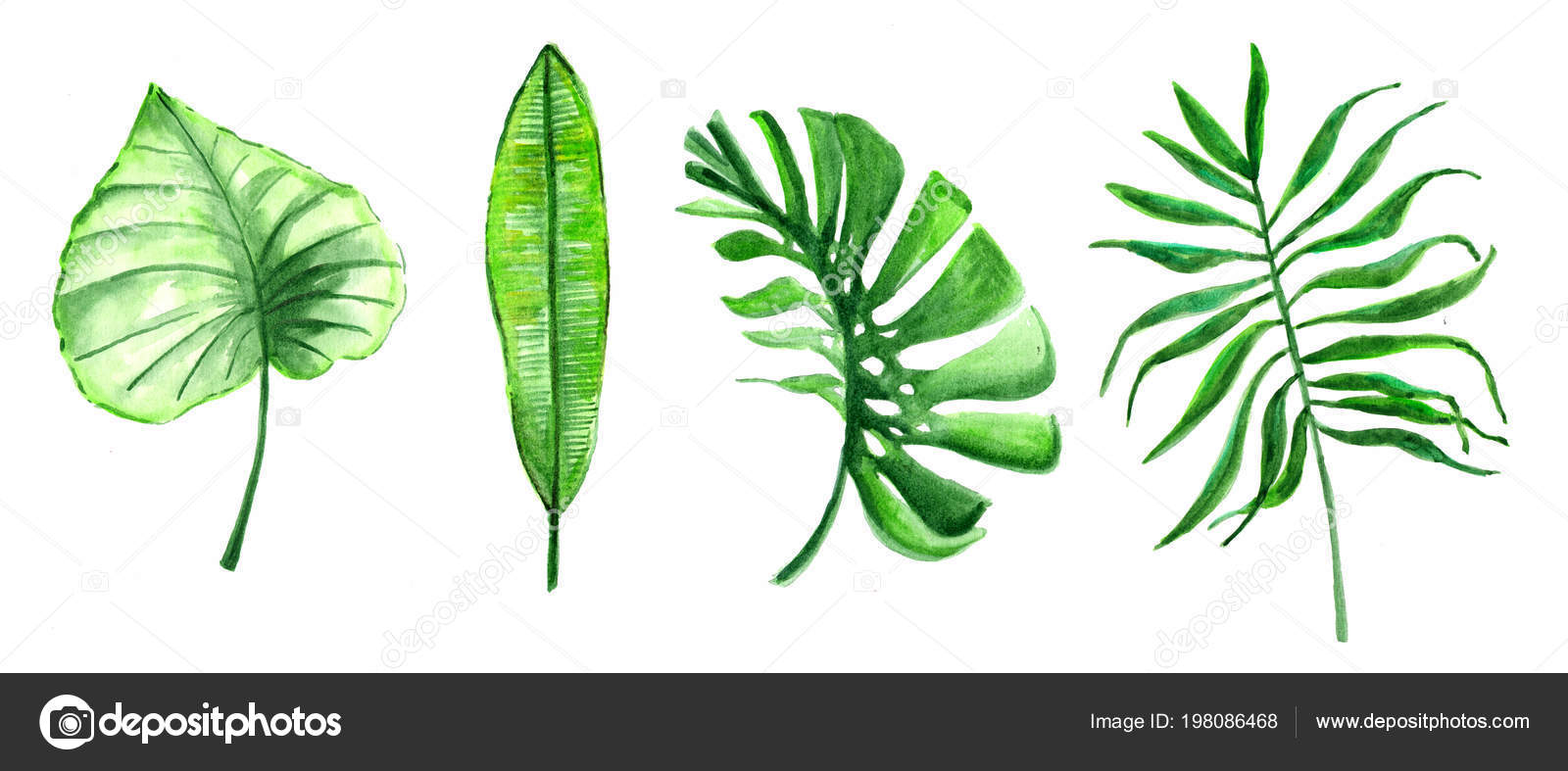 Watercolor Drawing Tropical Leaves Collection Stock Photo C Lyalya Savushkina Bk Ru 198086468 Learn how to draw tropical leaf pictures using these outlines or print just for coloring. https depositphotos com 198086468 stock photo watercolor drawing tropical leaves collection html