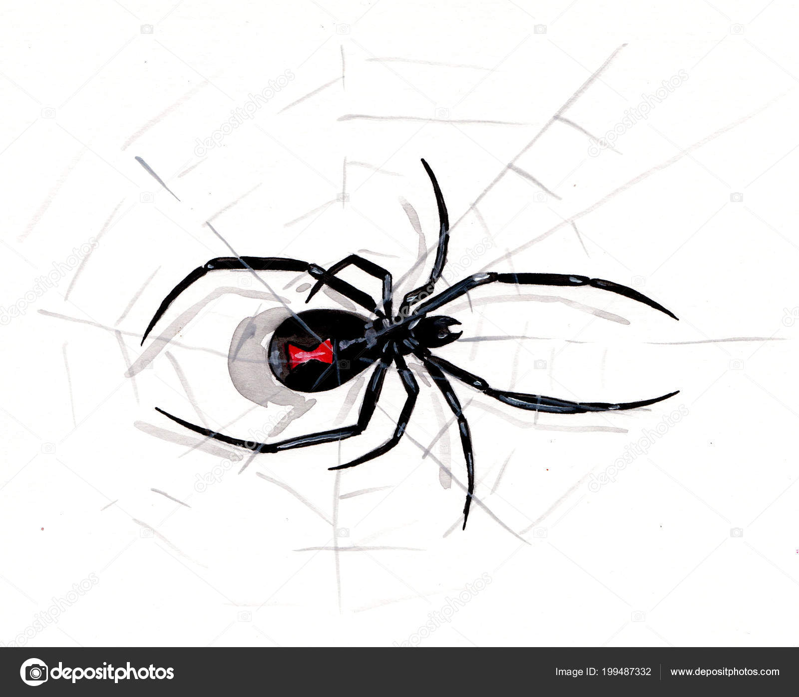 Watercolor Drawing Spider Black Widow Stock Photo C Lyalya