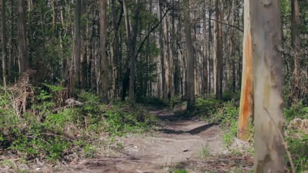 Mladá žena a muž se účastní závodu stezka lesem
