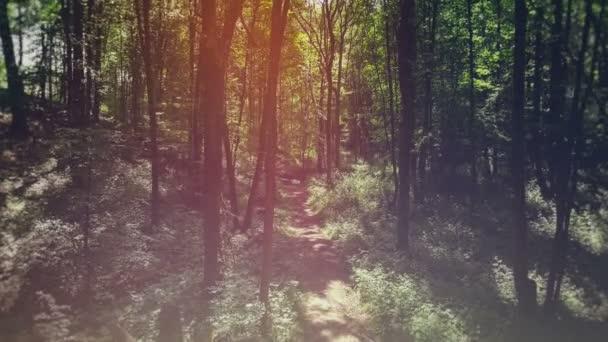 Pohled na zářivě zelené ráno Les.