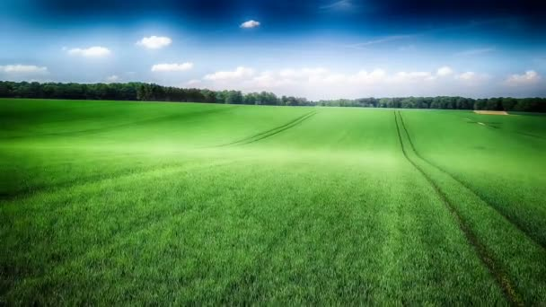 agricultural fields and summer country