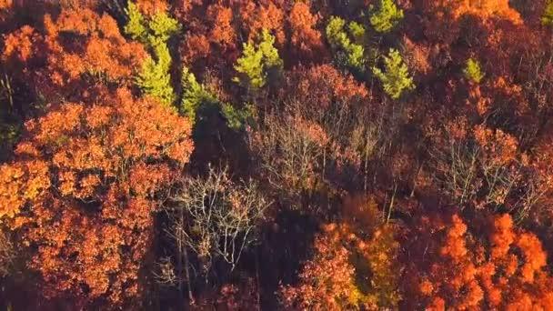 Panoramatické podzimní lesní krajina. Na podzim přírodní pozadí