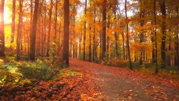 Turistika v podzimním lese s padajícím listím, 4k. Pozadí přírody