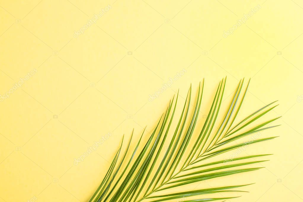 Palm branch on a yellow background. Free space for text. Flat lay, copy space