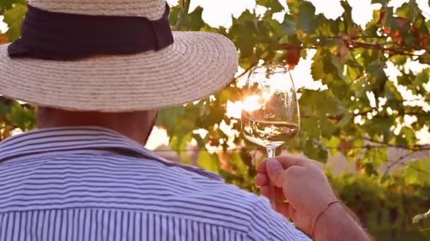Egy férfi egy pohár fehérborral. Személy Olaszország szőlőültetvényein naplementekor. Szőlőszüret egy toszkánai farmon. Napfény a keretben, szelektív fókusz.