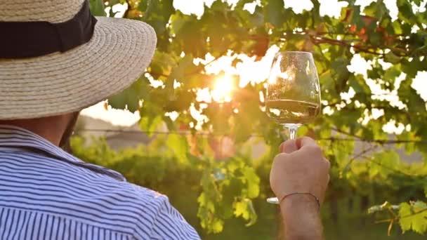 Osoba se sklenkou vína na vinicích v Itálii, Emilia Romagna region. Mladý muž v klobouku s vínem