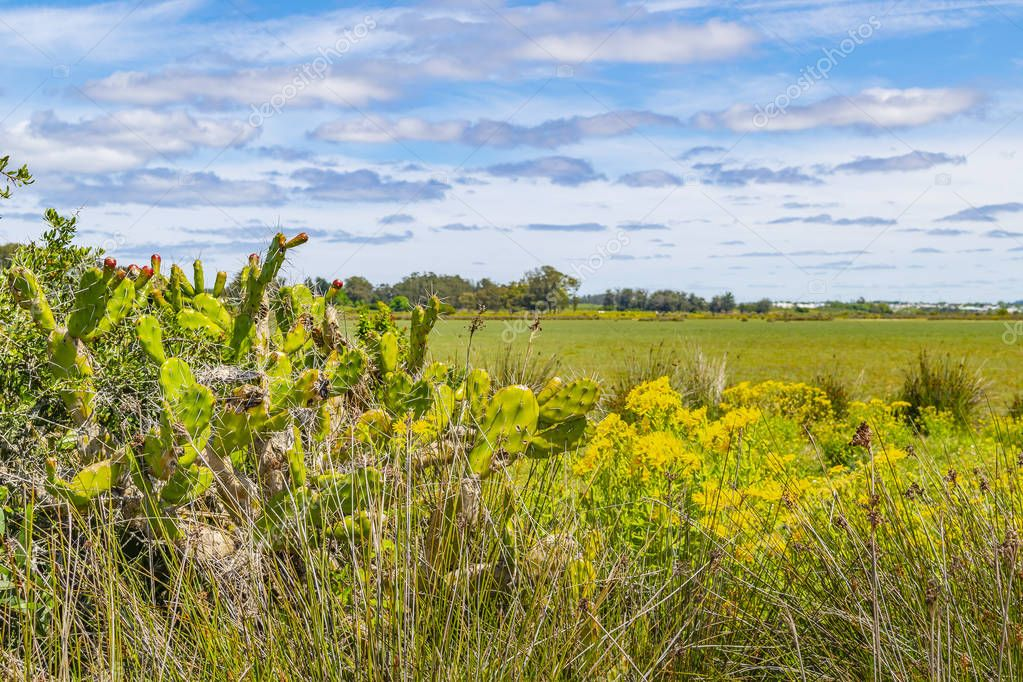 Sunny day meadow scene at indigenous park in maldonado department, Uruguay