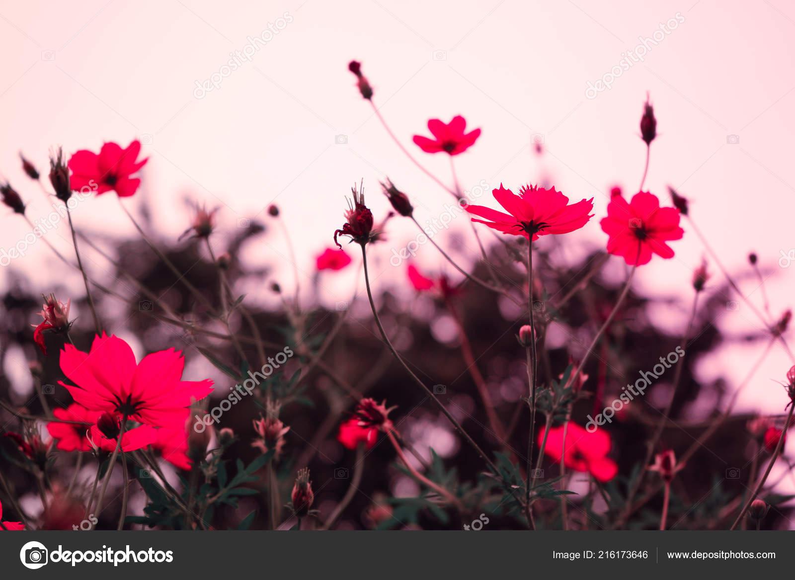 Hd Pink Flower Wallpaper Pink Flower Background Nature