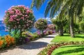 Jezero Lago Maggiore - krásné Isola madre okrasné květiny za stromy