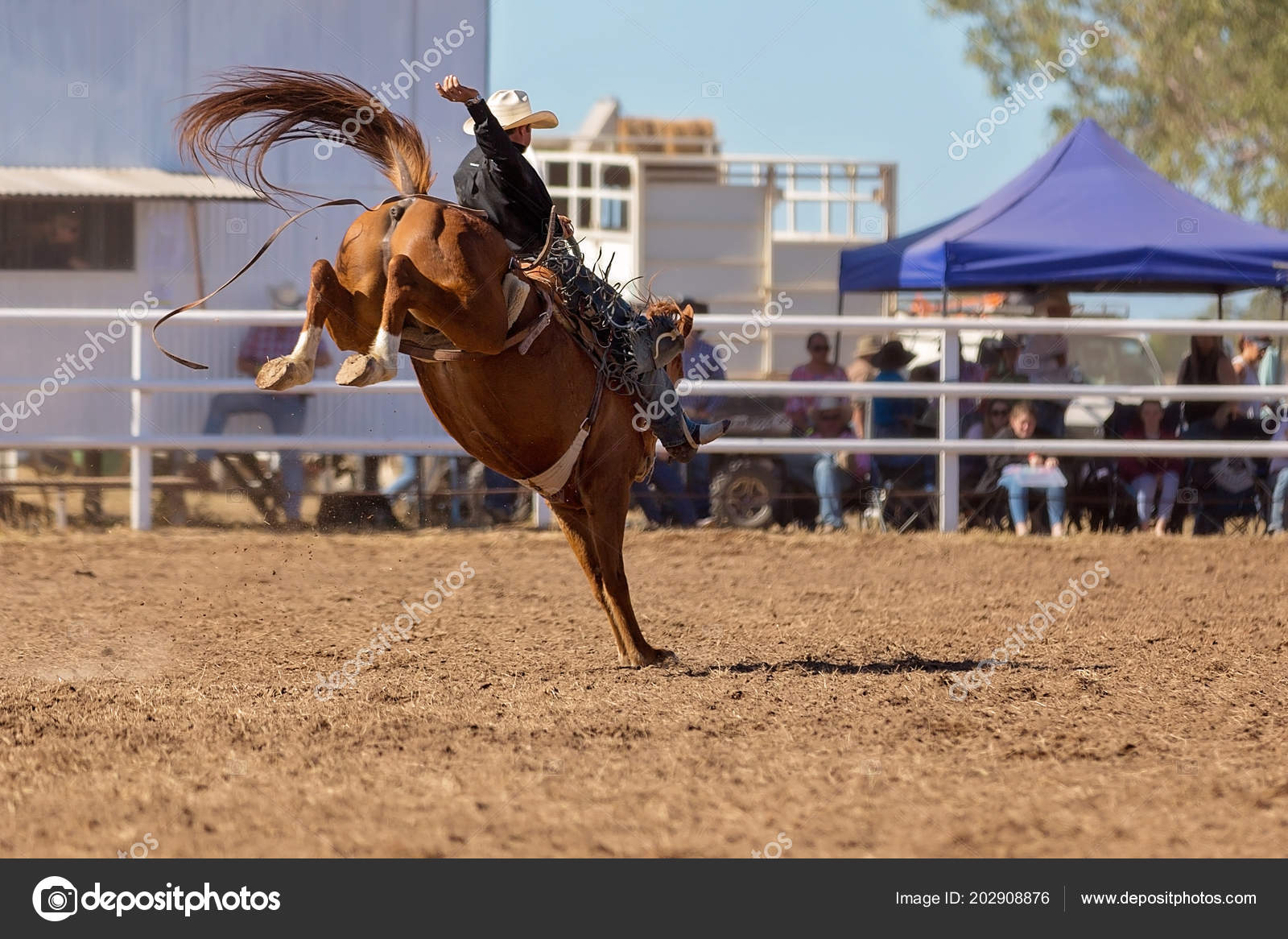Cowboy riding a bucking bronco horse in a competition at a country rodeo photo by jacksonstockphotography