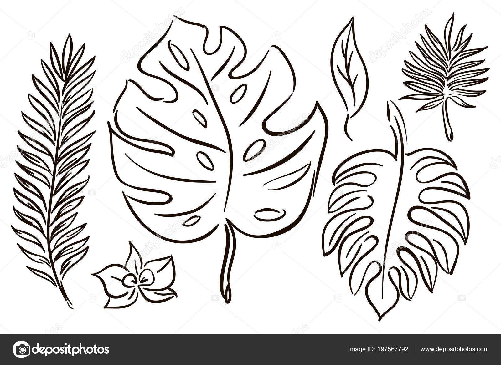 Tropical Leaf Outline Set Tropical Leaves Outline Hand Drawing Stock Vector C Inna Kunanbaeva Gmail Com 197567792 Tropical exotic plants with continuous line leaf and trendy organic shapes of pastel colors vector. https depositphotos com 197567792 stock illustration set tropical leaves outline hand html