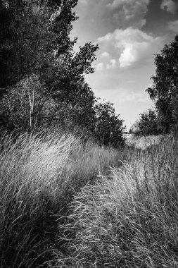 Wild grass field.  Path in the high grass.