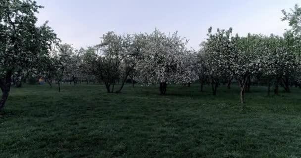 Flowering spring apple park CC ,