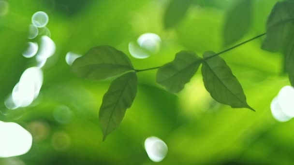 Green leaves with bokeh of defocus background.