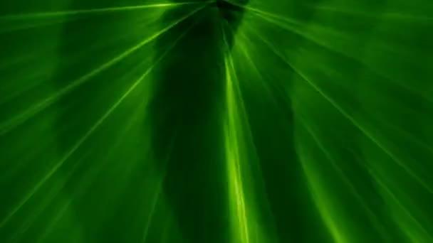 Zelený Laser Diskotékový efekt světla