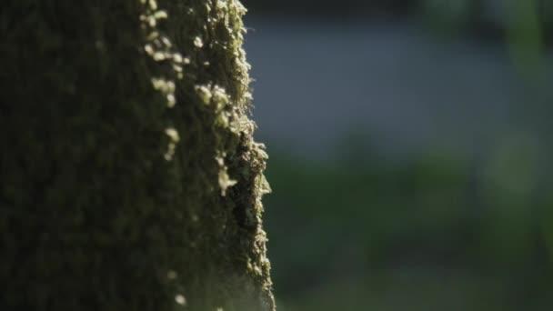 Kmen stromu, pokryté mechem
