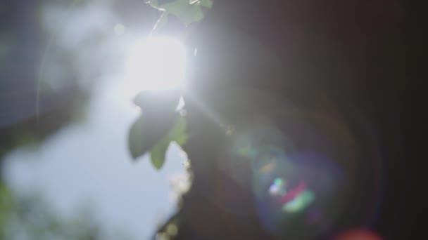 Baumstamm mit Moos bedeckt und Blätter