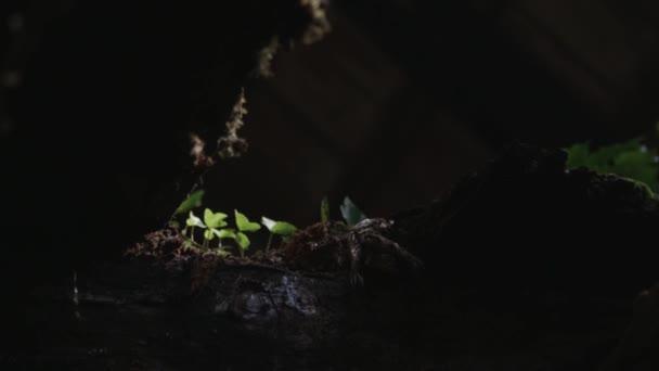 Little green plants growing on tree trunk.