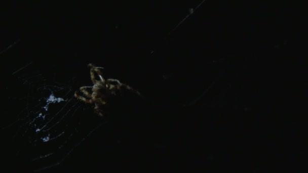 Pavouk na webu v tmavém pozadí