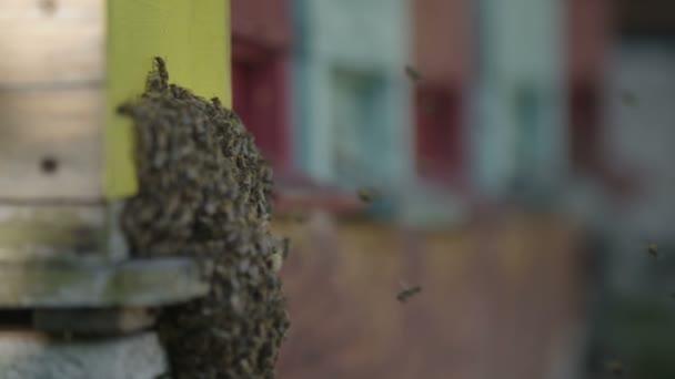 Színes méh méhkas és a méhek