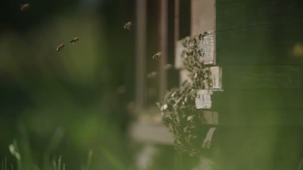 Úl včel sběr medu