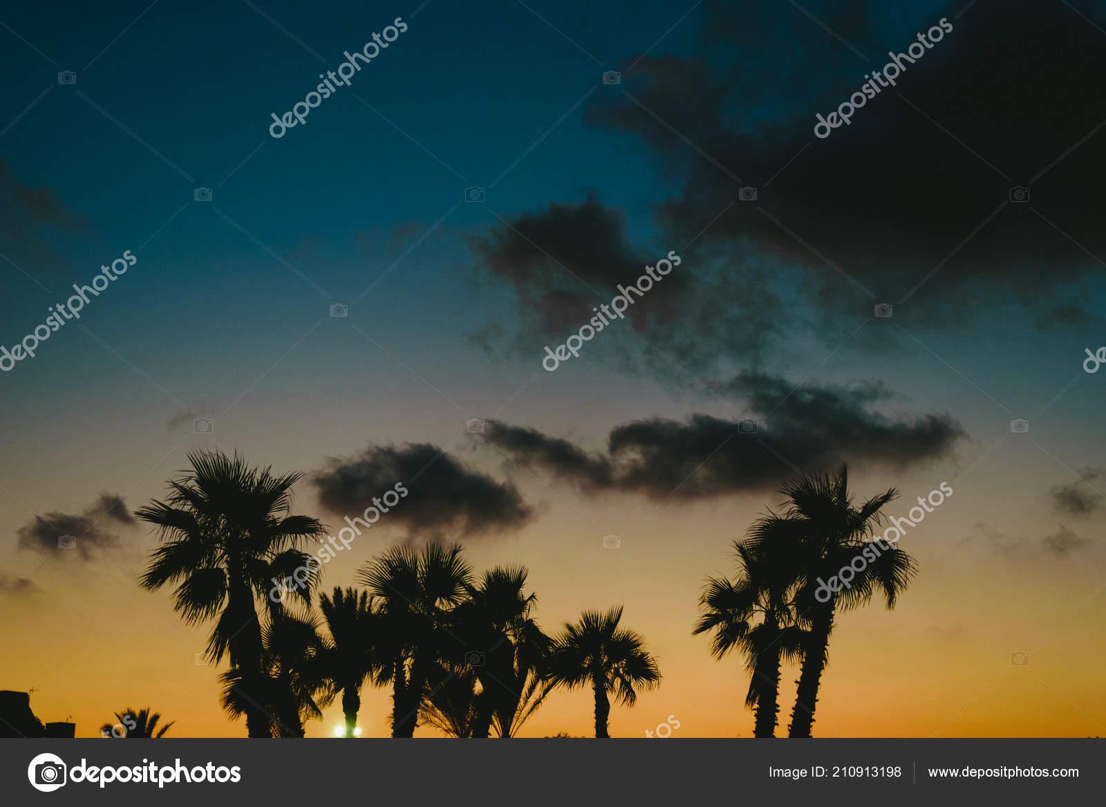 Backlit Palm Trees Sunset Beach Resort Town Summer Stock