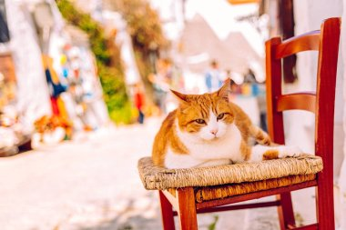 Orange chubby cat sitting on a wooden chair at the door of a tra