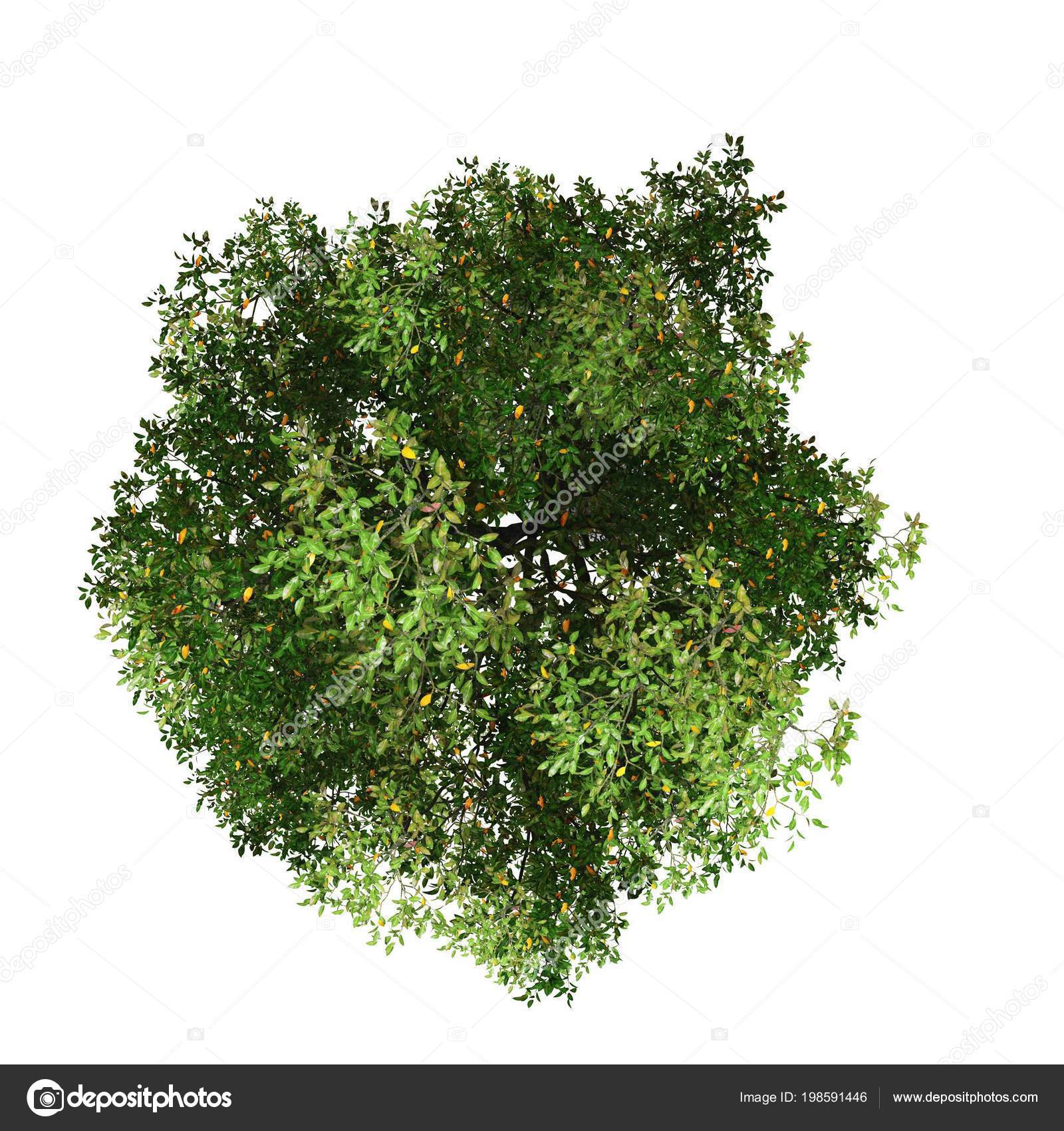 tree top view white background stock photo c chayathon 198591446 https depositphotos com 198591446 stock photo tree top view white background html