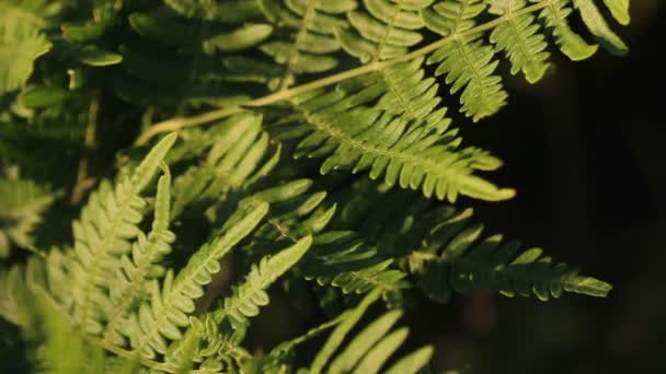 Natural fern leaf, fern leaf pattern. Green foliage with leaves ferns