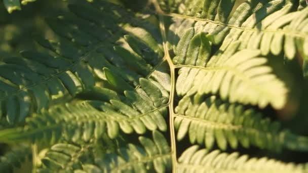 Přirozený list kapradí, vzor listů. Zelený listoví s listy kapradí