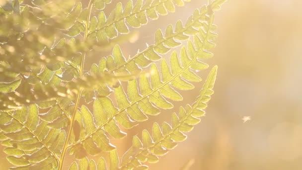 Természetes páfrány levél, páfrány levél mintát. Zöld lombozat levelek páfrányok