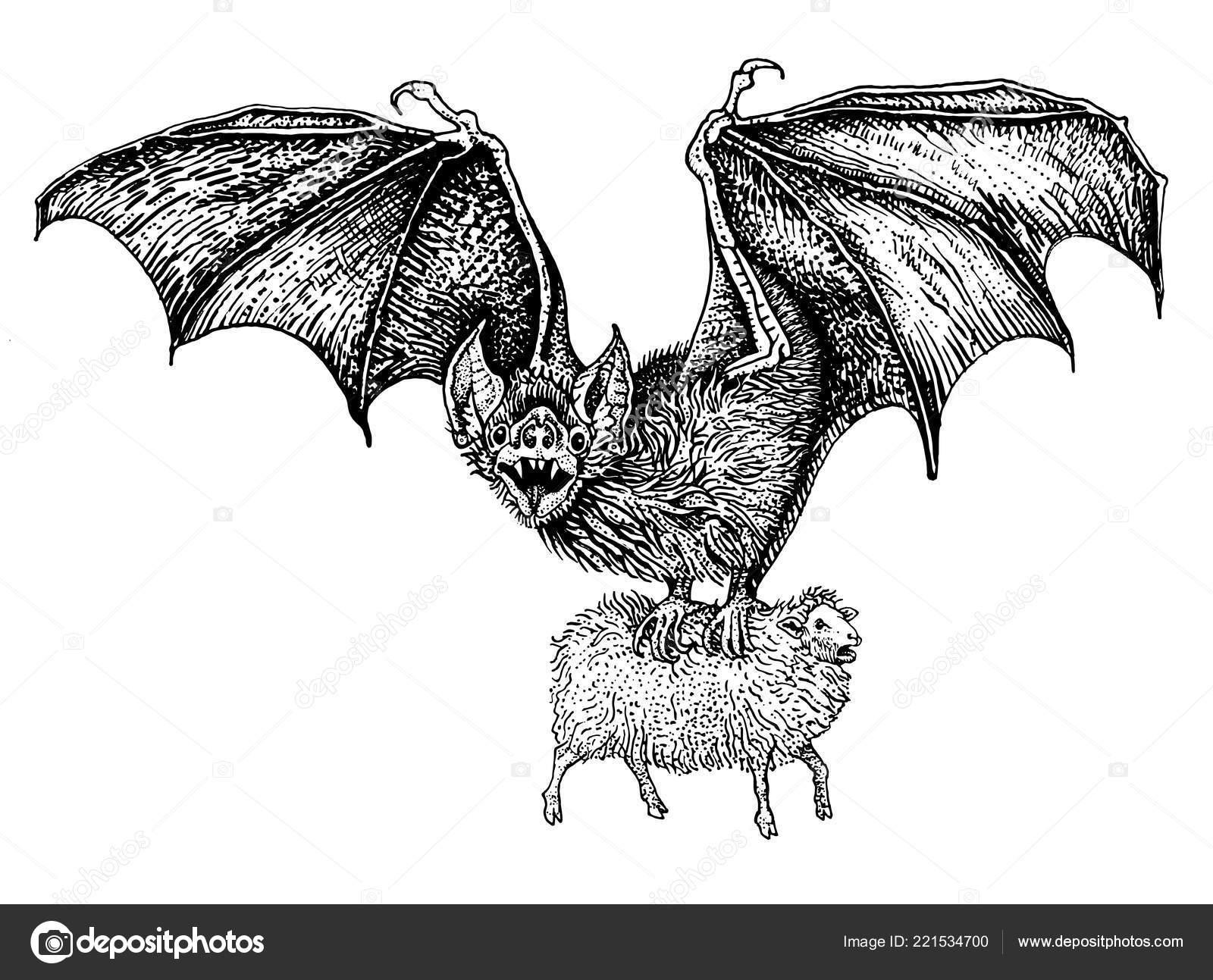 Vuelo De Murciélago Vampiro Gigante Cogió Una Oveja Vintage