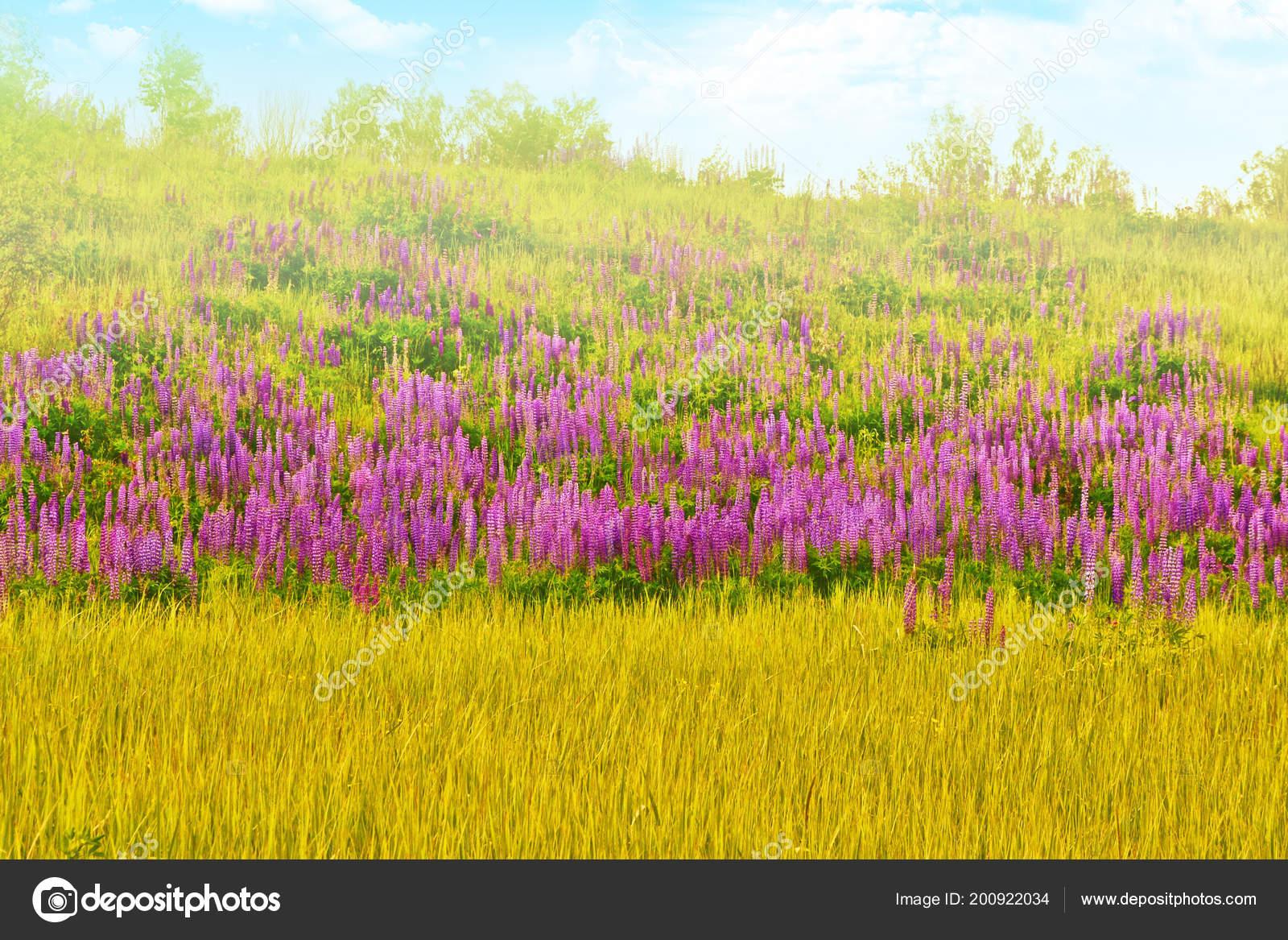 Blurred Natural Floral Background Summer Landscape Beautiful Bright
