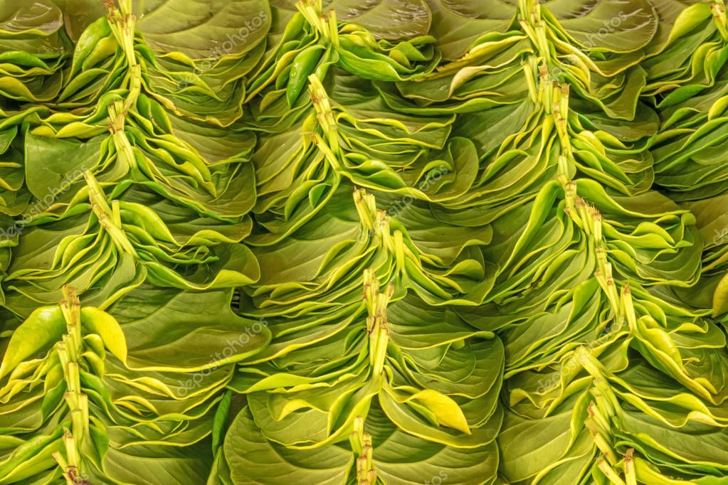 Stack Of Betel Leaves, close up of green ingredient