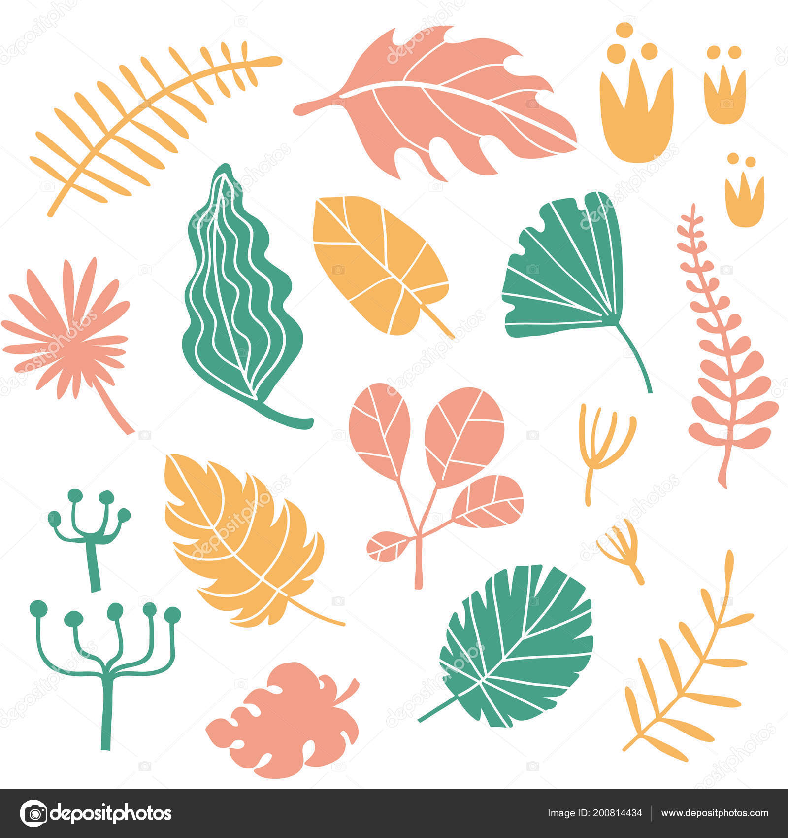 Tropical Plants Leaves Set Vector Collection Hand Drawn Tropical Flowers